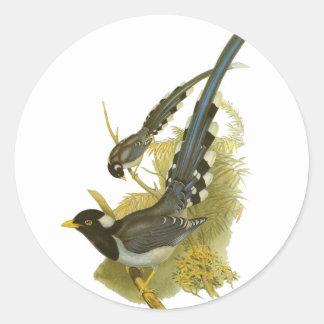 Yellow-billed Blue Magpie Classic Round Sticker