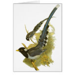 Yellow-billed Blue Magpie Greeting Card