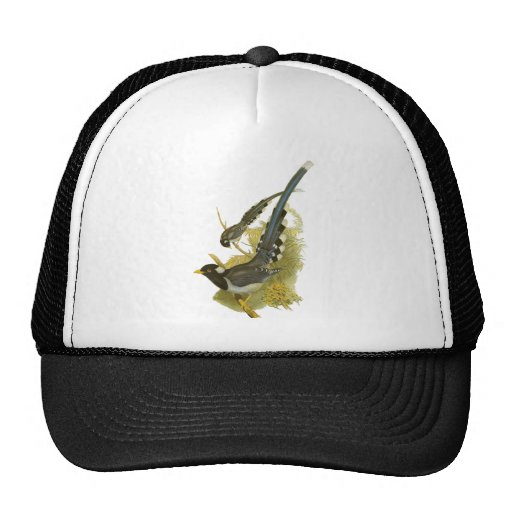 Yellow-billed Blue Magpie Hats