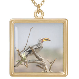 Yellow billed hornbill gold plated necklace