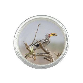 Yellow billed hornbill photo ring