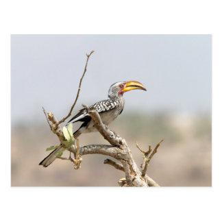 Yellow billed hornbill postcard
