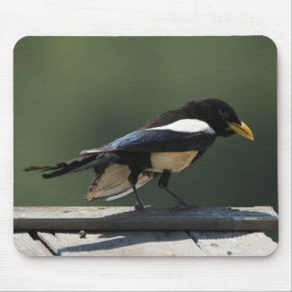 Yellow Billed Magpie Mouse Pad
