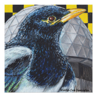 Yellow-Billed Magpie Poster by Artist Stephanie Ta