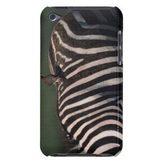 Yellow-billed oxpecker (Buphagus africanus) Barely There iPod Cover