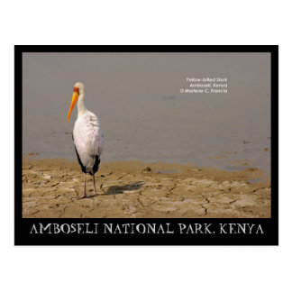 Yellow-billed Stork, Amboseli National Park, Kenya Postcard