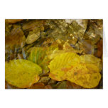 Yellow Birch Leaves in Stream Card