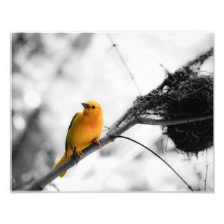 Yellow Bird Photo Print