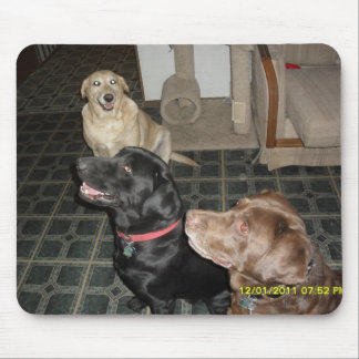 yellow, black, and chocolate labs mouse pad
