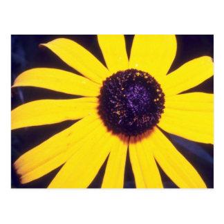 yellow Black eyed Susan flowers Postcard
