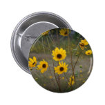 Yellow black Florida Wildflower Photograph Buttons