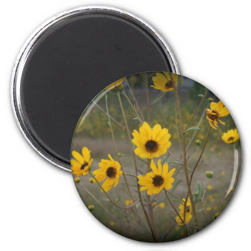 Yellow black Florida Wildflower Photograph Magnets