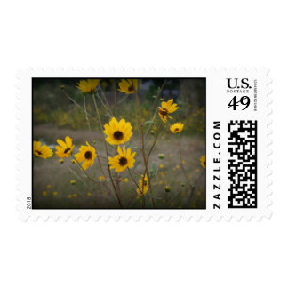 Yellow black Florida Wildflower Photograph Postage Stamps