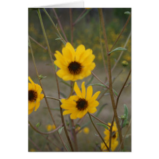 Yellow black Florida Wildflower Photograph Stationery Note Card