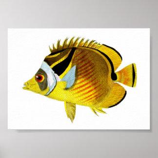 Yellow Black Tropical Fish Art Print no. 4