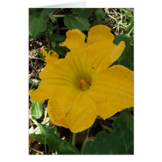 yellow blossom photograph Thank you Card