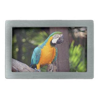 Yellow & blue macaw bird belt buckle