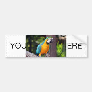 Yellow & blue macaw bird bumper sticker