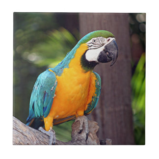 Yellow & blue macaw bird tile