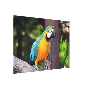 franwestphotography Yellow & blue macaw canvas print