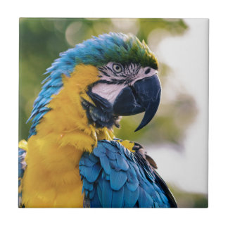 Yellow Blue Macaw Parrot Ceramic Tile