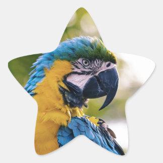 Yellow Blue Macaw Parrot Star Sticker