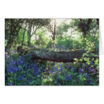 Yellow Bluebell wood, Howe Park Wood, Milton Keyne Cards