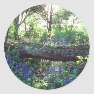 Yellow Bluebell wood, Howe Park Wood, Milton Keyne Round Stickers