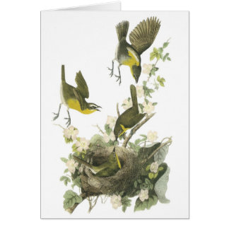 Yellow-breasted Chat by Audubon Cards
