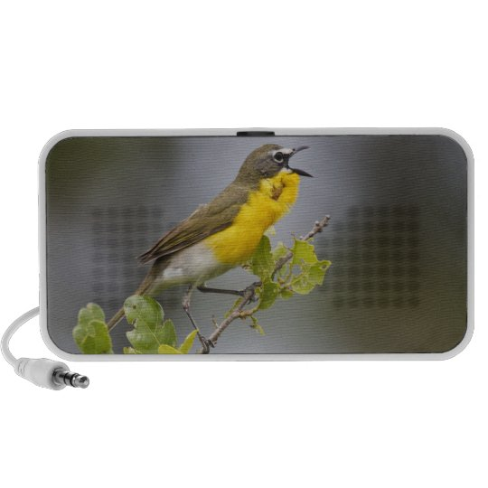 Yellow-breasted Chat (Icteria virens) singing on Mini Speaker