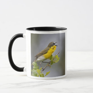 Yellow-breasted Chat (Icteria virens) singing on Mug