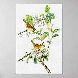 Yellow-breasted Warbler John Audubon Birds America Poster
