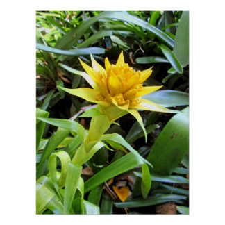 Yellow Bromeliad Posters