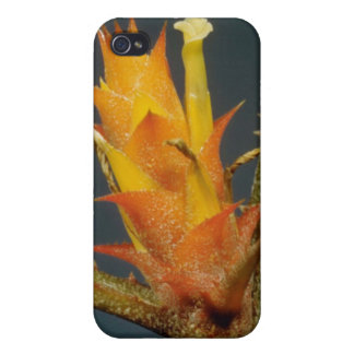 yellow Bromeliade spp. flowers Covers For iPhone 4