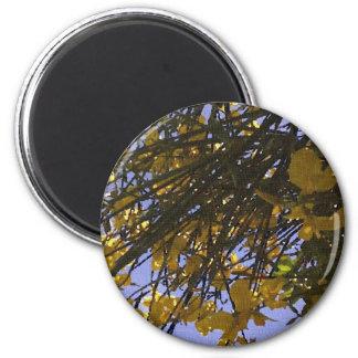 Yellow Broom Fridge Magnet