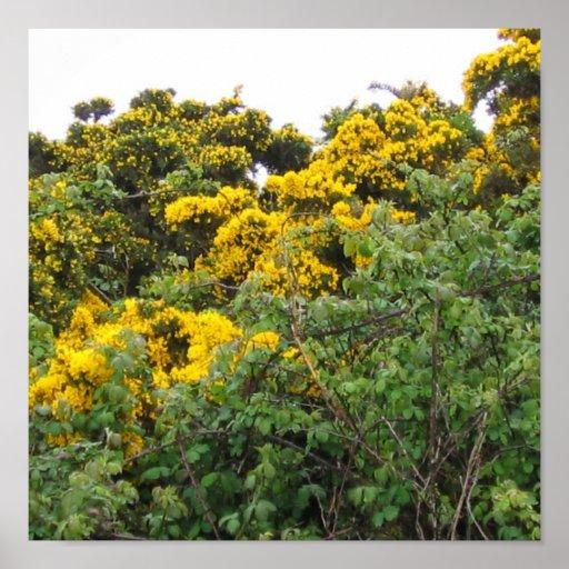 Yellow Broom Poster