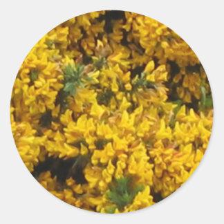 Yellow broom stickers