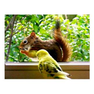 Yellow Budgie Watching Nibbling Squirrel Postcard