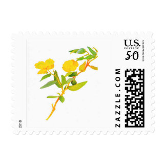 Yellow Bush Poppy Flower Postage