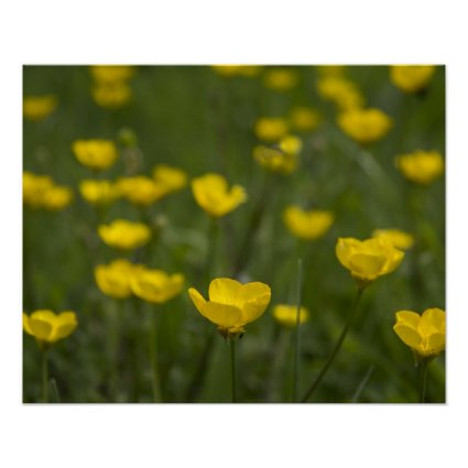 Yellow Buttercup Flowers Print
