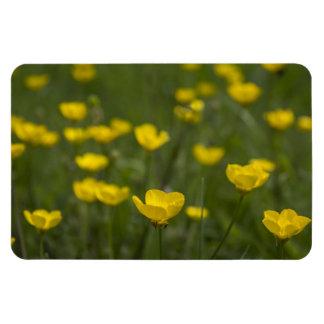 Yellow Buttercup Flowers Rectangular Photo Magnet