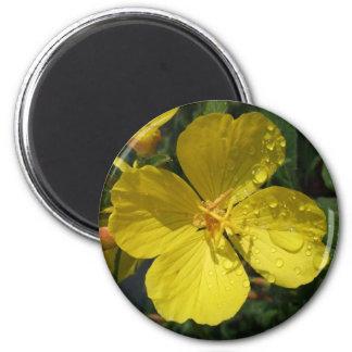 Yellow Buttercup Magnet
