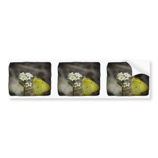 Yellow Butterfly Bumper Stickers