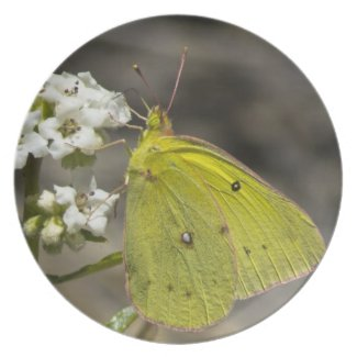 Yellow Butterfly Dinner Plates