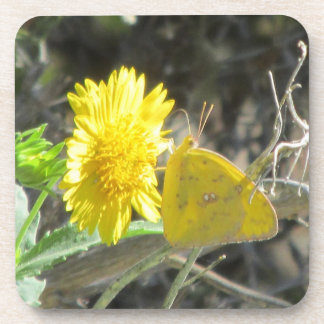 Yellow Butterfly Feeding on Yellow Flower Coasters