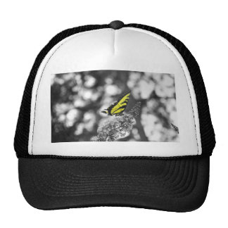 Yellow Butterfly Hats