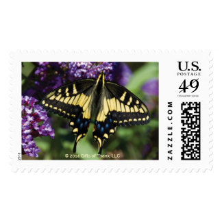 Yellow Butterfly II - 20 Postage Stamps