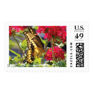 Yellow Butterfly III - 20 Postage Stamps