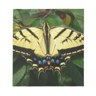 Yellow Butterfly Memo Note Pads