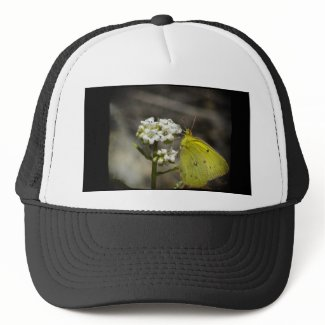 Yellow Butterfly Mesh Hats